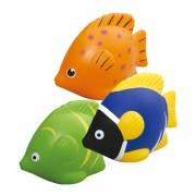 Stress Tropical Fish